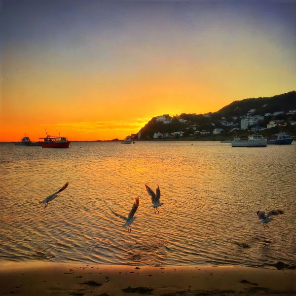 At the waters edge... Island Bay Wellington  New Zealand IPhoneography IPhone Water_collection Sunset Nature_collection Sunset_collection Seagulls
