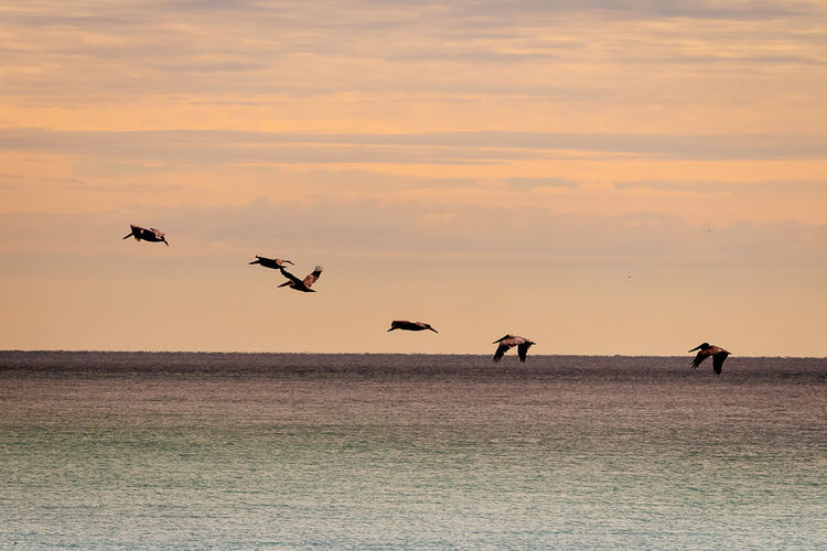Animal Themes Sky Animal Wildlife Sunset Flying Animals In The Wild Animal Bird Group Of Animals Vertebrate Cloud - Sky Scenics - Nature Beauty In Nature Mid-air Spread Wings Orange Color Water Tranquility Sea No People Horizon Over Water Flock Of Birds