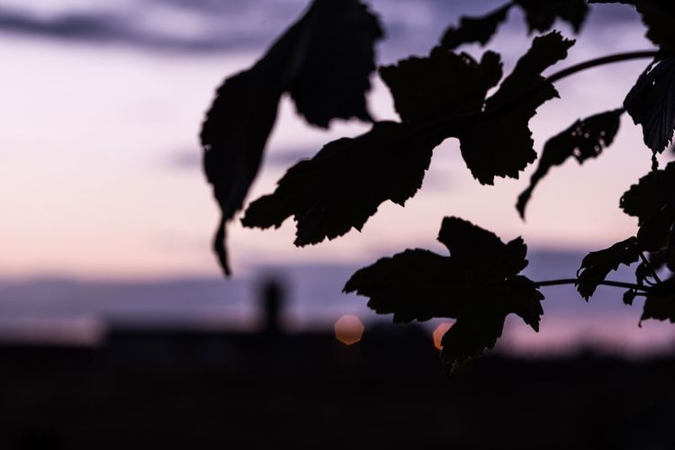 Nature Silhouette Sunset Beauty In Nature Outdoors Focus On Foreground No People Fragility Leaf Close-up Sky Flower Water Tree Freshness Day Nikon UK EyeEm Nature Lover EyeEm Best Shots - Nature EyeEm Gallery Nikonphotography Nikon Northeast Bokeh Purple