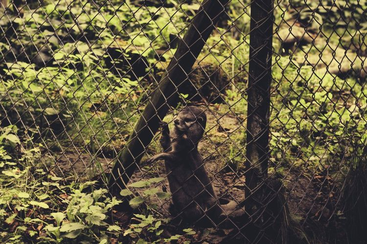 Animal Head  Animal Themes Chainlink Fence Day Endangered Species Fence Focus On Foreground Mammal One Animal Outdoors Protection Safety Tranquility Tree Trunk Zoo
