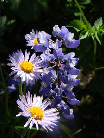 Blackandwhite Flower Flower Photography Flowers Mountain Wilderness Mt. Rainier Mead Perfect Flower Perfect Wildflower