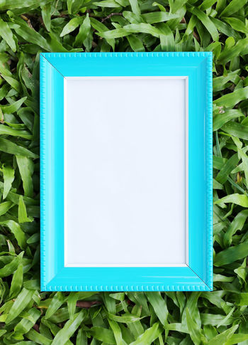 Blue picture frame on green lawn in top view for the design nature background. No People Blue Blank Green Color Plant Close-up Copy Space High Angle View Directly Above Day White Color Nature Plant Part Frame Leaf Paper Outdoors Still Life Open Paint Picture Frames Green Lawns Top View Design Blue Picture Frame