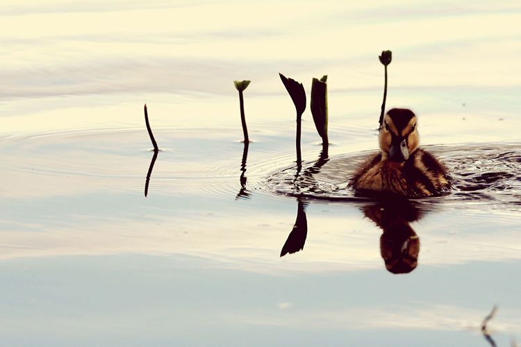 Woman in a lake