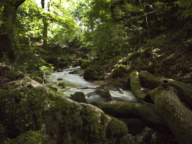 Janet's Foss Beauty In Nature Day Forest Green Color Moss Nature No People Outdoors Plant River Scenics Tree Water Waterfall