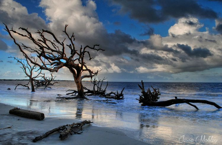 Atmosphere Bare Tree Beach Beauty In Nature Branch Calm Cloud Dramatic Sky Drift Wood  Driftwood Horizon Over Water Jekyll Island Majestic Nature Remote Scenics Sea Seascape Shore Sky Tourism Tranquil Scene Tranquility Water