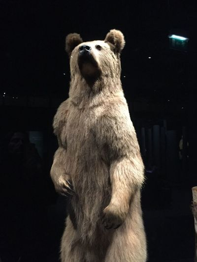 One Animal Animal Themes Bear Histoire D'ours