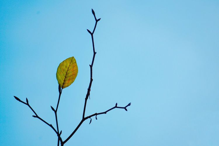 Copy Space Low Angle View Clear Sky Nature Blue Yellow No People Outdoors Leaf Growth Beauty In Nature Sky Day Leaves Tree Nature Light And Shadow Colors Blue Sky Winter Minimalism Abstract Bokeh Beauty In Nature Leisure Activity