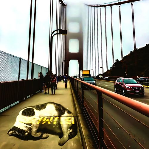Cat on the bridge Cats Cat Golden Gate Bridge San Francisco Architecture Built Structure Transportation Car Bridge Motor Vehicle Bridge - Man Made Structure City Sky Building Exterior Nature Men