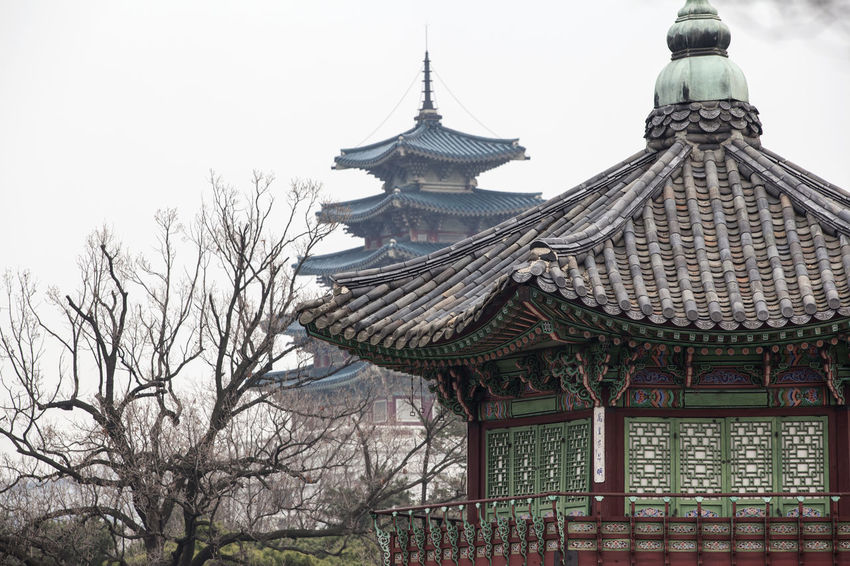 Architecture Branch Building Exterior Built Structure Choseon Dynasty Church Clear Sky Day Famous Place Gyungbok Palace Historic Building Historic Place Low Angle View No People Outdoors Palace Place Of Worship Religion Roof Sky Spirituality Temple - Building Tradition Tree