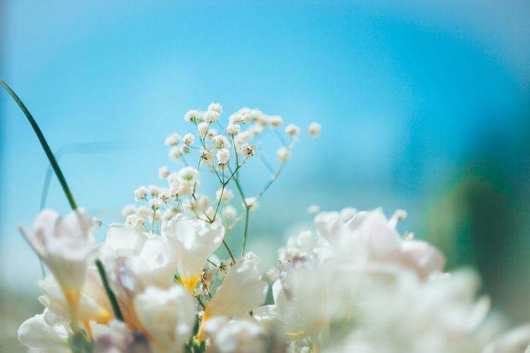 Close-up of white flowers against blue sky