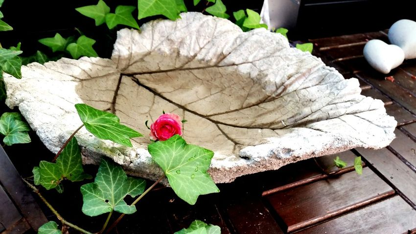 Concrete Leafs Water Rose🌹 Pink Rose Secret Garden Concretelove Concretedesign Water_collection Water Fountain