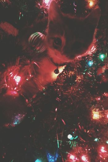 new kitty loves Christmas The Moment - 2014 EyeEm Awards The Illuminator - 2014 EyeEm Awards
