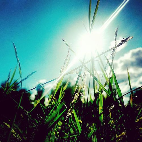 Growth Rural Scene Sunbeam Nature Sunlight Sun Field Close-up Agriculture Clear Sky Outdoors No People Plant Cereal Plant Sky Beauty In Nature Tranquil Scene Timothy Grass Wheat Day EyeEmNewHere