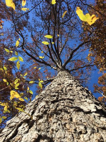 Tree Low Angle View Tree Trunk Nature Branch Growth Day Beauty In Nature Autumn Outdoors No People Sunlight Flower Full Frame Yellow Sky Climbing Close-up