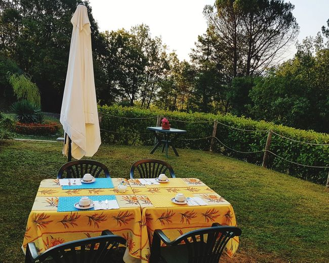 Ready for Breakfast Culture Green Green Color Nature Photography Flowers No People Outdoor Photography Tablecloth Table Yellow Color Sunumbrella Coffee Cup Tree Grass Domestic Garden Outdoor Cafe Prepared Food