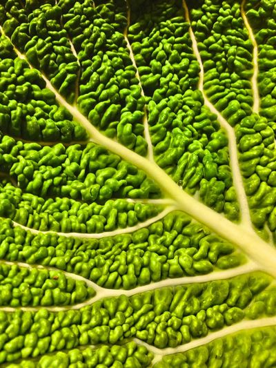 Savoy cabbage leaf Vegetables Savoy Cabbage Leaf Vegetable Food Edible  Healthy Five A Day Green Greens Diet Close Up Pattern Pieces