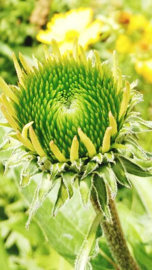 Flower Flower Head Close-up Plant Green Color
