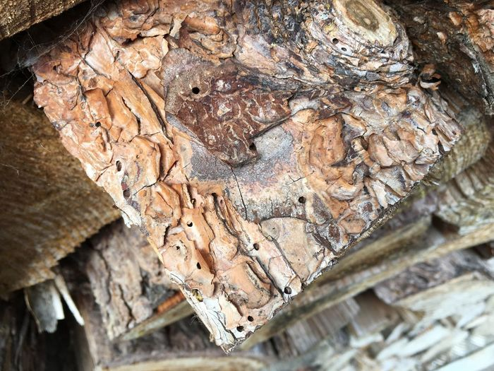 Bark Beetle Bark Beetle Bark Beetle Infestation Close-up Feeding Damage Fire Wood Herbivore Damage Wood Wood - Material Wood Pest