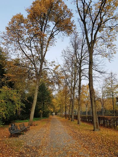 Berlin Nature Relaxing Love Tree Autumn Walking Around Walking Walk Leaves