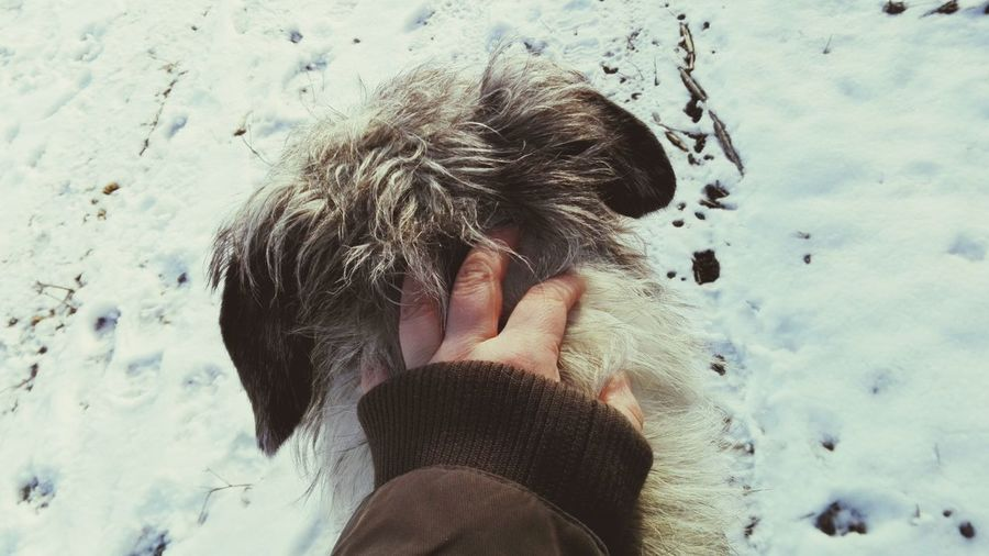 One Person Real People Human Body Part Lifestyles Outdoors Snow Cold Temperature Winter Close-up Human Hand From My Point Of View Pet The Dog Winter 2017 January 2017 It Is Cold Outside Irish Wolfhound Dogs Of Winter Cearnaigh Hound Of Dogs Of EyeEm Cearnaigh Irish Wolfhound Dogslife Dogwalk