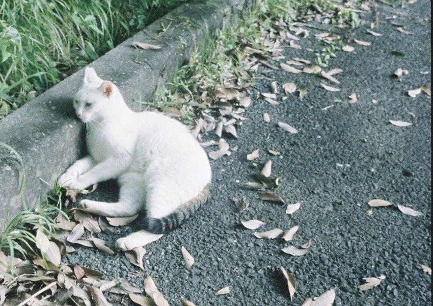 フィルム ハーフカメラ ハーフ Cat