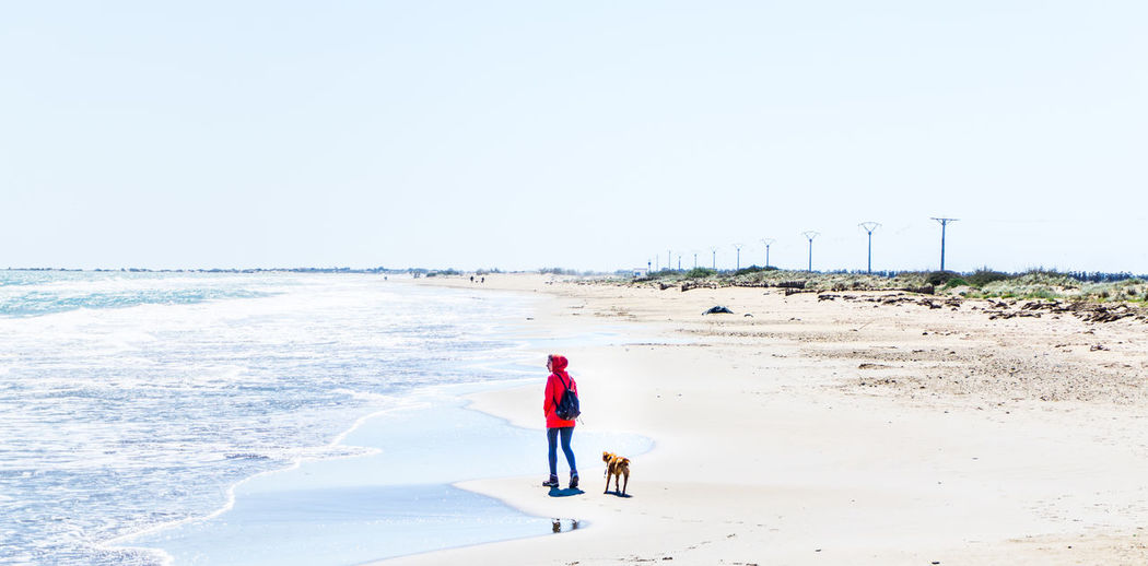 Rear view of woman walking with dog on beach against clear sky