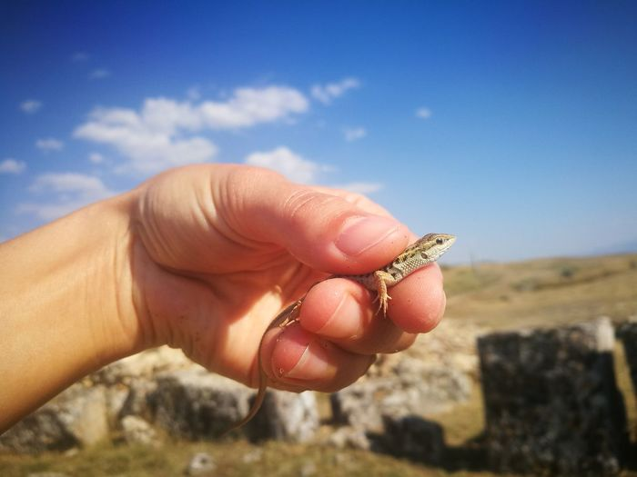 Close-up of person holding lizard against sky