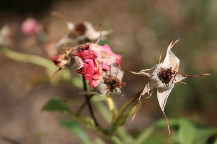 Floralphotography Wilted Flower Beauty Among The Wilted