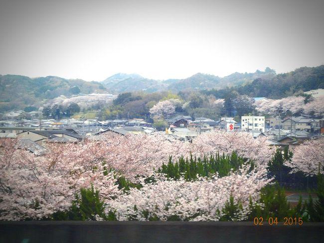 Hello World Landscape_Collection sakura garden Amazing View Nice Picture 😉👌