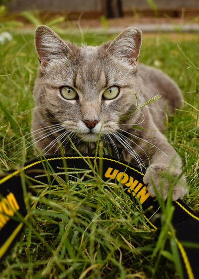 Portrait of cat on grassy field