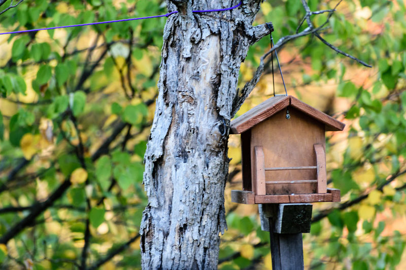 Autumn Animal Themes Animals In The Wild Beauty In Nature Bird Feeder Close-up Day Focus On Foreground Growth Hanging Nature No People Outdoors Tree Tree Trunk Wood - Material Wooden Post