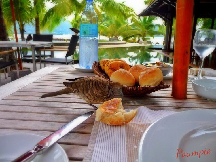 Seychelles Bird Birds Oiseaux