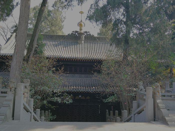 Tree Greenhouse