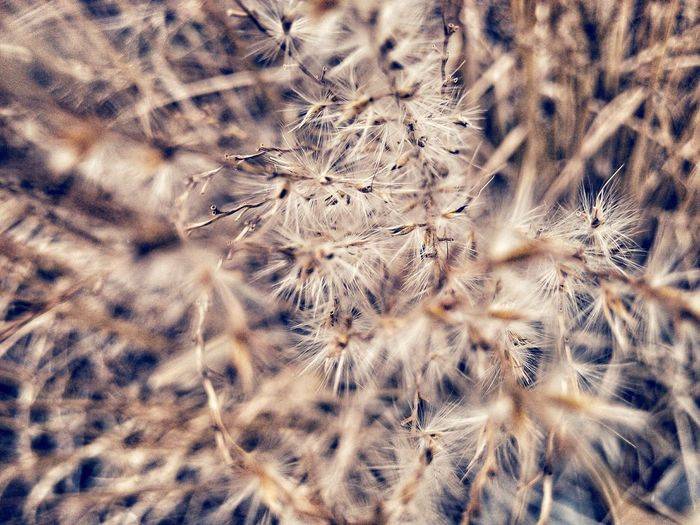 Full frame shot of silver grass