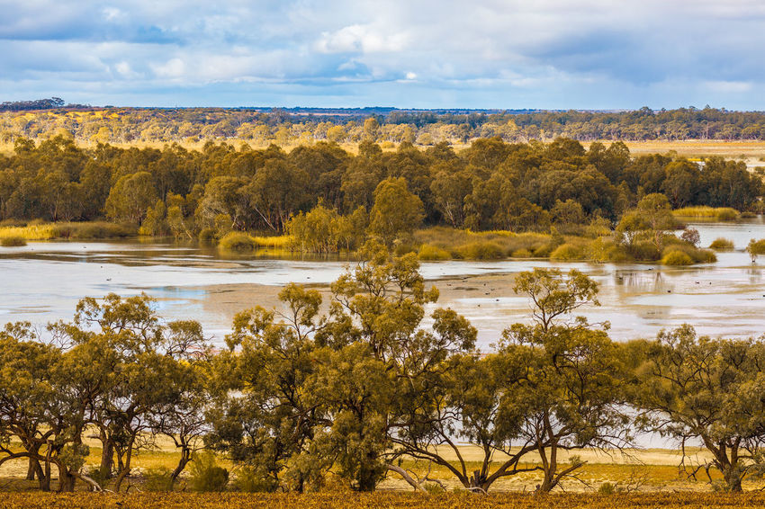 Mallee eucalyptuses on Murray River in Riverland, South Australia Gum Tree Murray River Riverland South Australia Beauty In Nature Cloud - Sky Day Environment Growth Lake Land Landscape Mallee Murray Nature No People Outdoors Plant River Scenics Scenics - Nature Sky Tranquil Scene Tranquility Tree Water