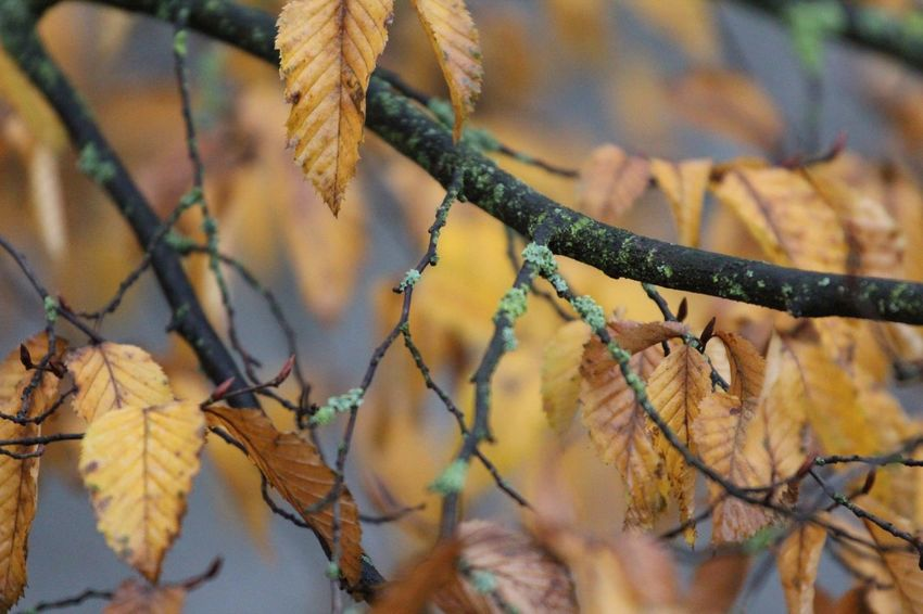 Autumn Herbst Herbst17 🦋 Autumn17 Autumn Day Leaf Outdoors Close-up No People Nature Growth Branch Beauty In Nature Beauty In Nature Blätter Nature