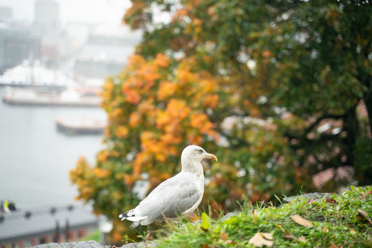 Seagull perching on a tree