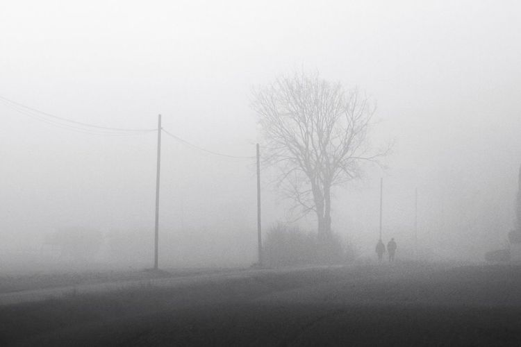 Eyem Best Shots Italy Nature Mist Landscape Trees Foggy Morning Forest Non-urban Scene Tree Outdoors Tranquility GoodFellas_IMP The EyeEm Facebook Cover Challenge EyeEmBestPics EyeEm Nature Lover Foggy Day My Winter Favorites December Grey Blackandwhite
