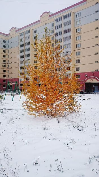 City Building Exterior No People Outdoors Novemberphotoaday Snow Day Clours Autumn Colors снег ноябрь осень прекрасна 🌾🍂🍃 Осень 🍁🍂