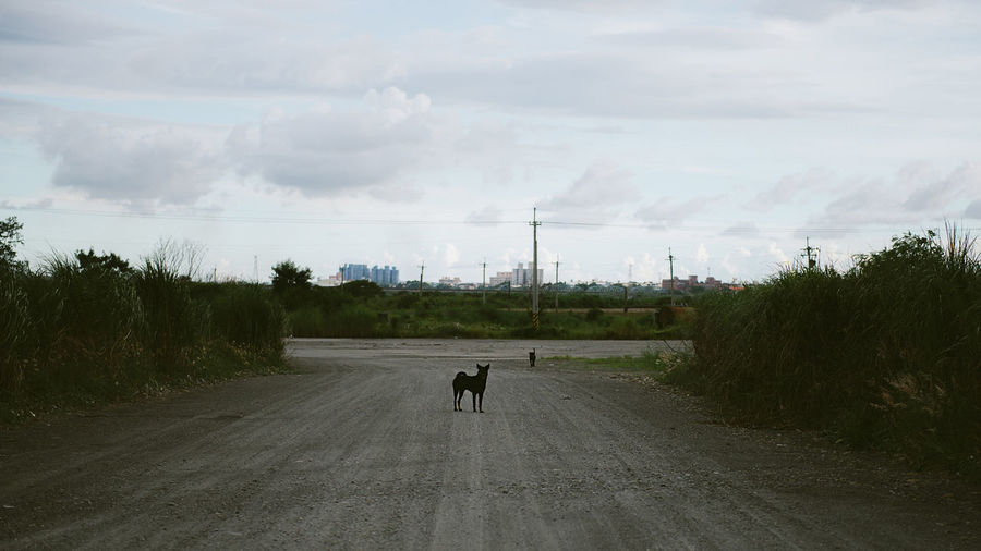 Dogs standing on road against sky