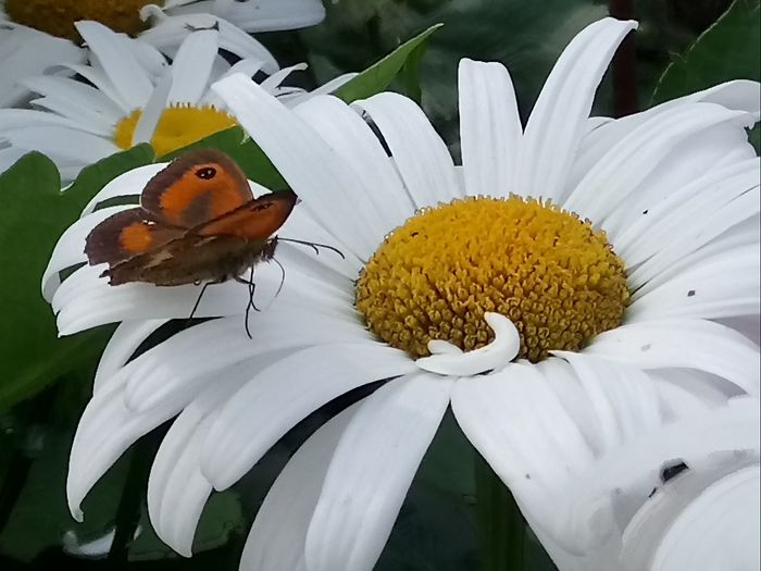 Seen in my garden today Flower Insect Petal Close-up Flower Head Nature. Beauty In Nature
