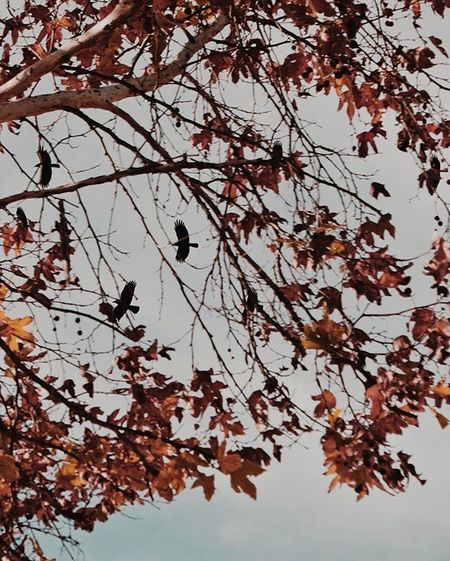 Birds and Branches.😃 Dreamcreateprosper TheCreatorClass Mkexplore Lifeofadventure VSCO Vscogang Visualsgang Premiumposts Vscogramer Top_selects ExploreEverything Justgoshoot Featuremeinstagood Instagood Instavibes Nothinnspecial ExploreEverything Featuremeinstagood Instagood Instavibes Way2ill Agameoftones Weexplore_ HSDailyFeature Createcommune socality