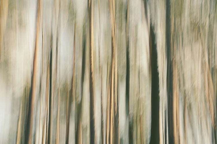 Backgrounds Pattern Plant Nature Abstract Beauty In Nature Abstract Backgrounds Blurred Motion