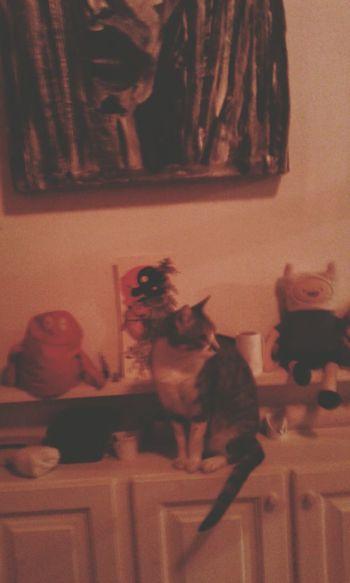 Taking Photos Enjoying Life Ph Consuelo Sánchez Kiwi Lovecats❤️ Cat Lovers Horadeaventura  Adventure Time Finn Finn And Jake