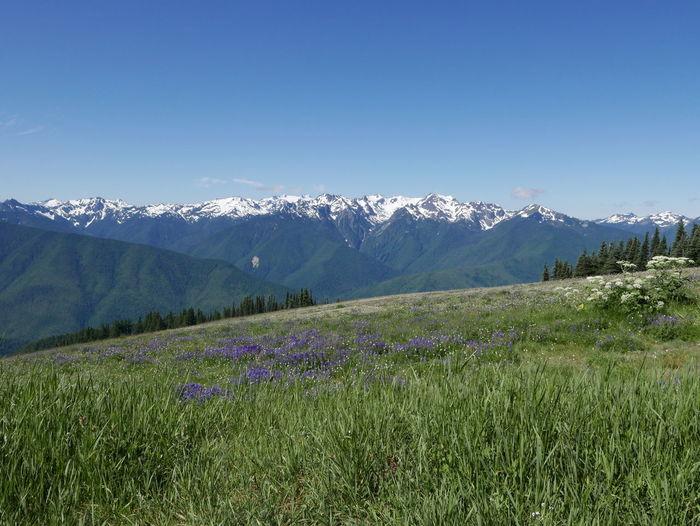Beauty In Nature Hurricane Hill Landscape Mountain Mountain Range Nature Scenics Snow Peaked Mountains