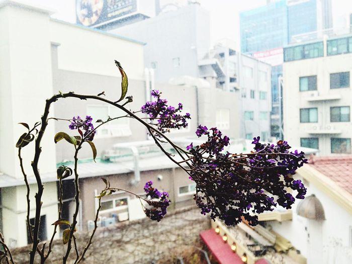 Flowers Purple Window