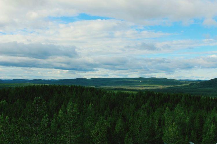 Land of Sweden MADE IN SWEDEN Sweden-landscape Forrest National Park