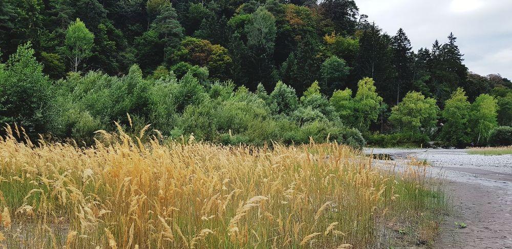 Rheinufer No People Outdoor Photography Rhein River Tree Sky Plant Green Color Grass Riverbank Riverside