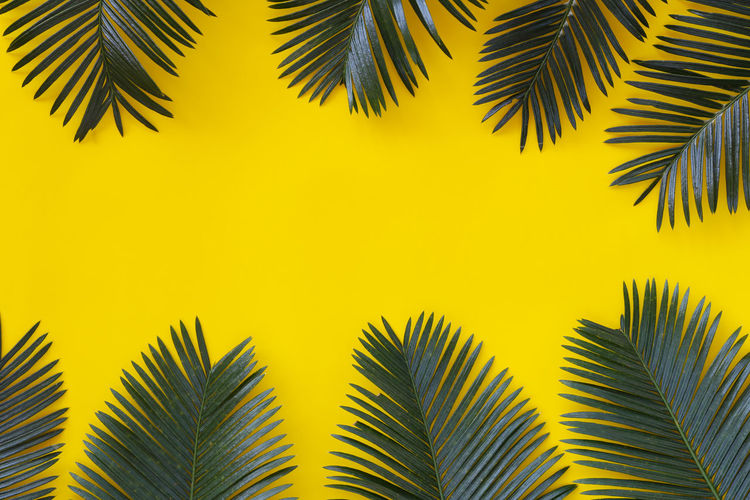 Freshness green leaves of wild palm on yellow paper background and have copy space for your design in your work. Freshness Green Leaves Wild Palm Yellow Paper Background Copy Space Design Work Tropical Leaf Foliage Nature Exotic Greenery Jungle Plant Floral Forest Frame Branch Detail Set Vine Decoration Lush Decorative Garden Freshness Ornamental Large Climbing Ecology Grow Hawaii Split Rainforest Houseplant Creeper Liana Tree Top View Lay Design Collection