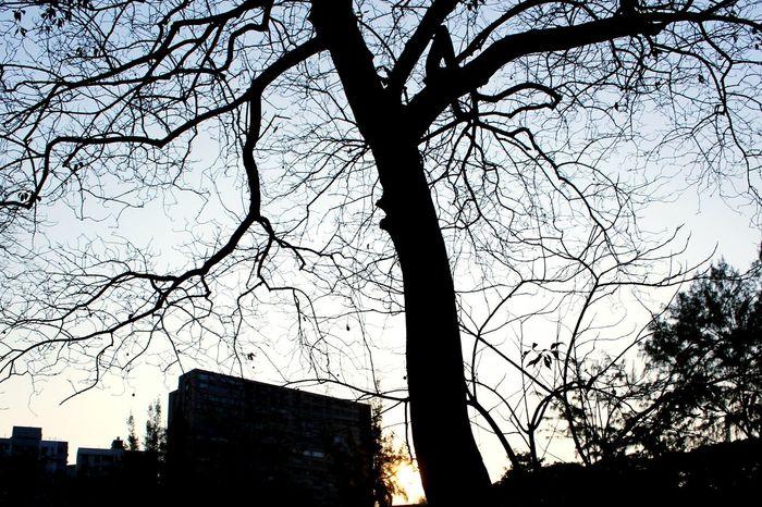 2015 Life In Hong Kong· Tree Nature Nature Photography Hong Kong Sky